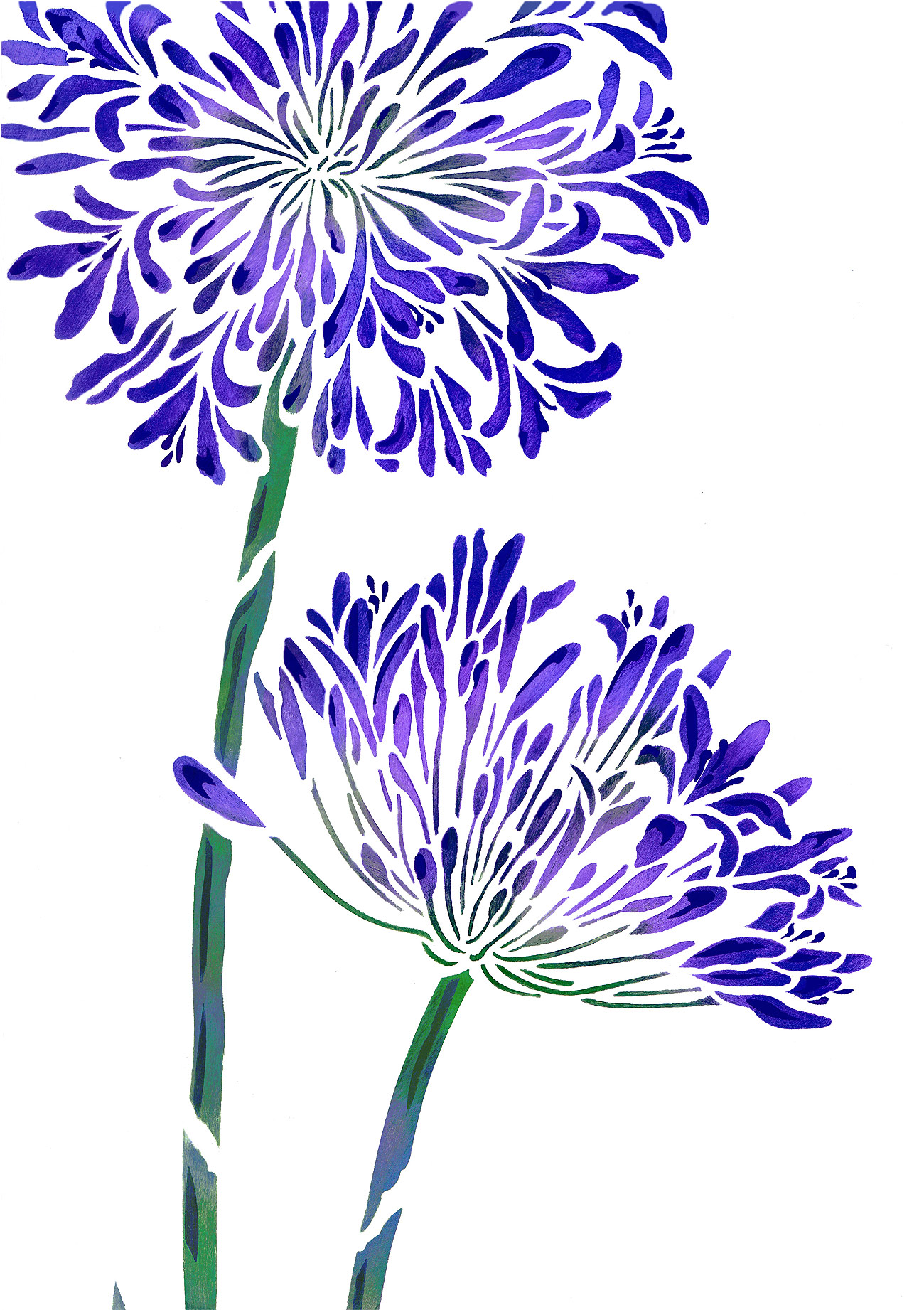 Agapanthus clipart #1, Download drawings