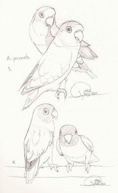 Agapornis coloring #3, Download drawings