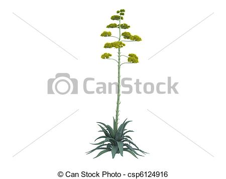 Agave clipart #17, Download drawings