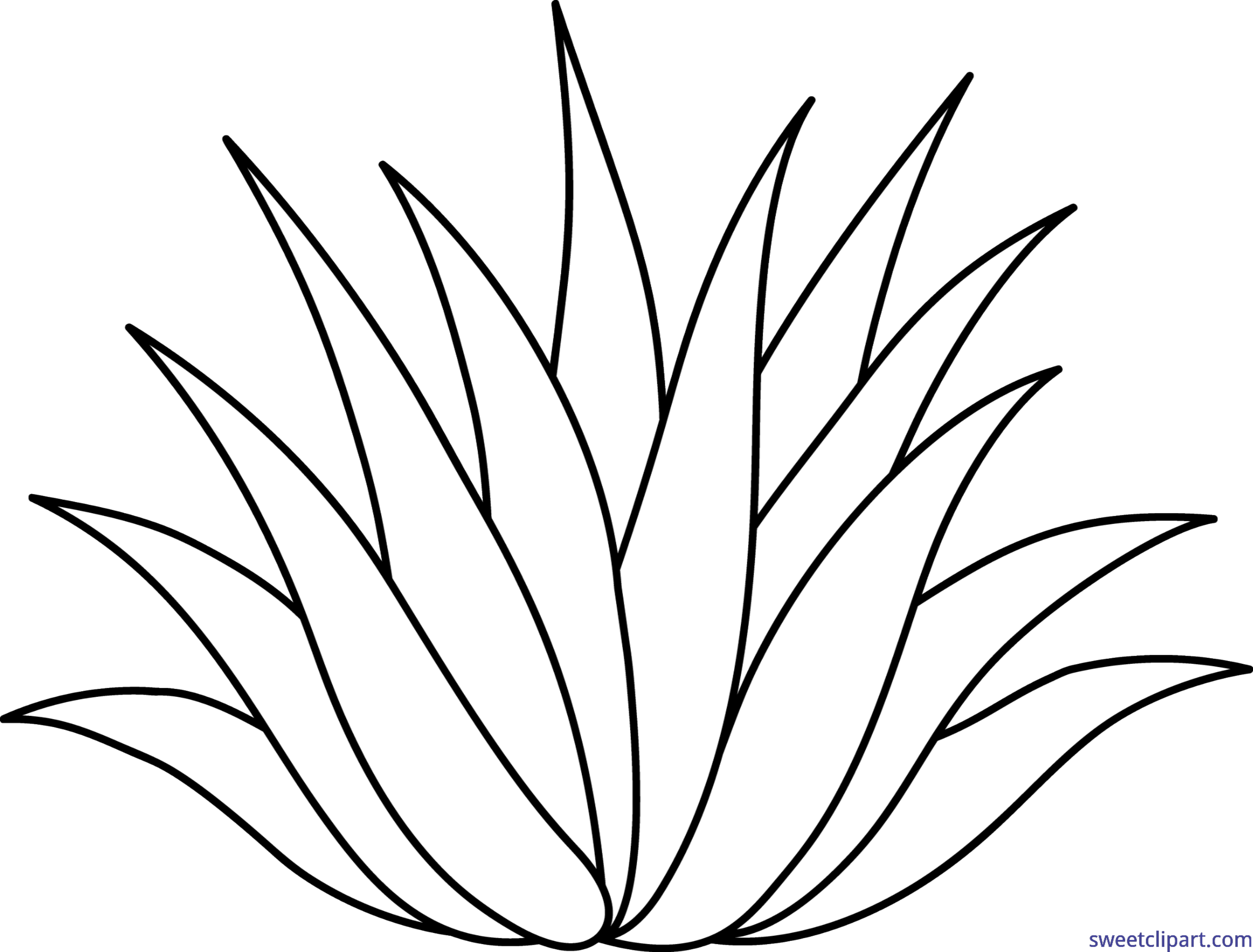 Agave clipart #1, Download drawings