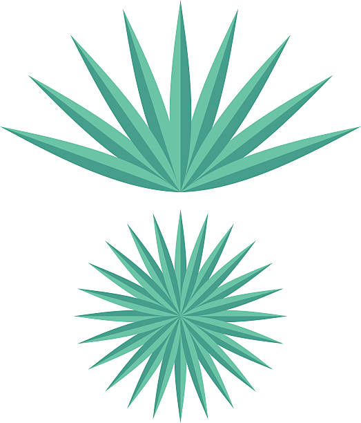 Agave clipart #6, Download drawings