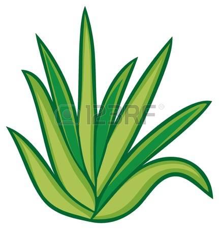 Aloe Vera clipart #20, Download drawings