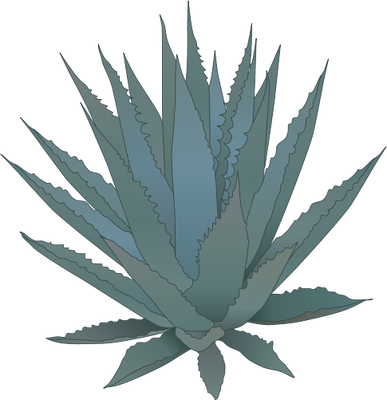 Agave svg #19, Download drawings
