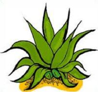Agave clipart #20, Download drawings
