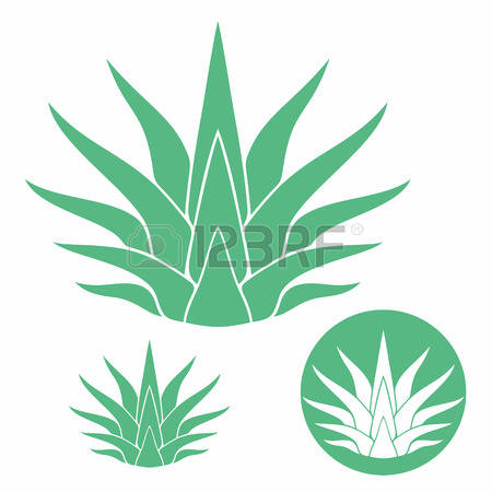 Agave clipart #10, Download drawings
