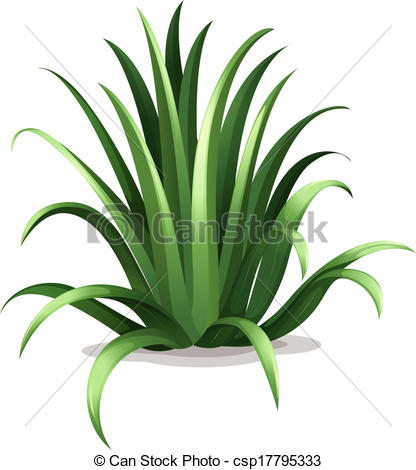 Agave clipart #18, Download drawings