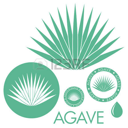 Agave clipart #8, Download drawings