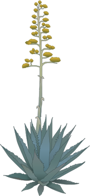 Agave svg #12, Download drawings
