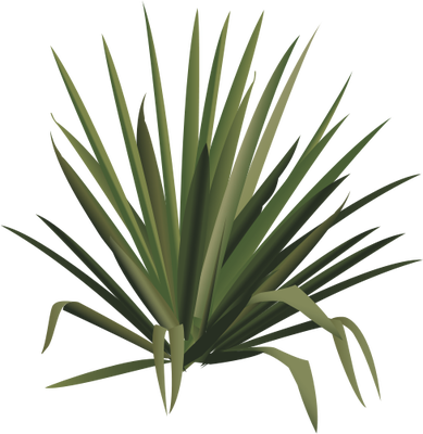 Agave svg #9, Download drawings