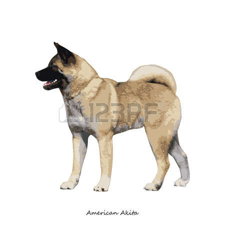 American Akita clipart #17, Download drawings
