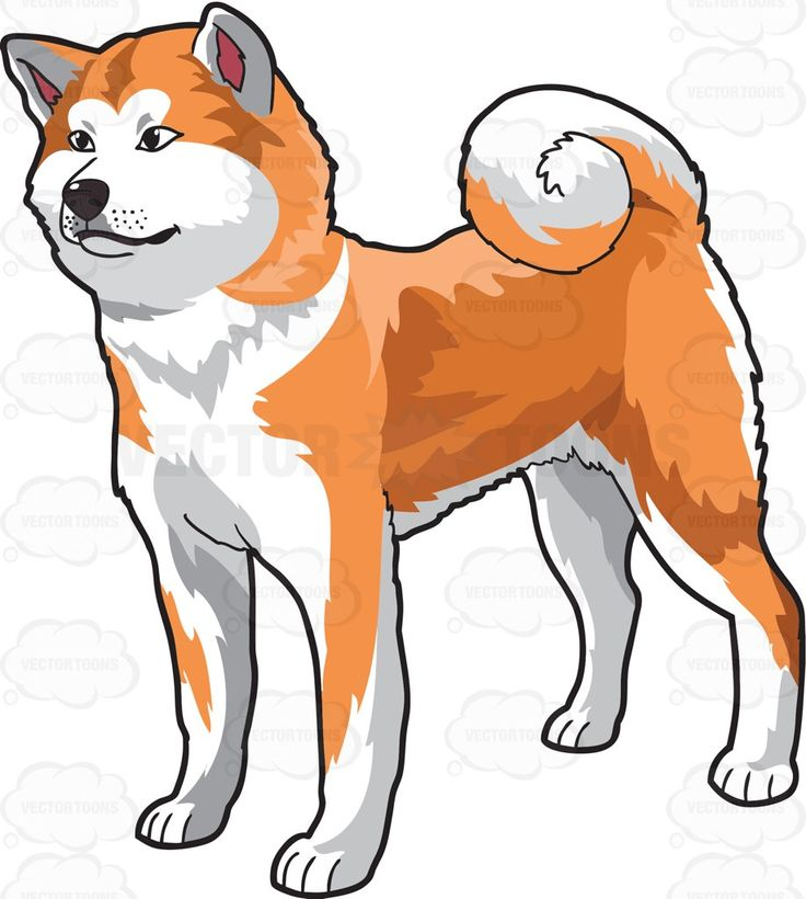 Japanese Akita clipart #18, Download drawings