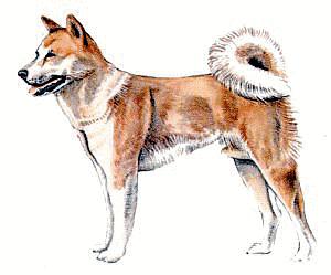 Akita clipart #1, Download drawings