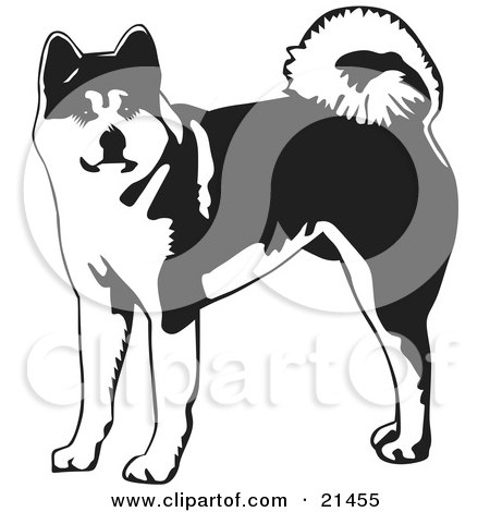 Japanese Akita clipart #1, Download drawings