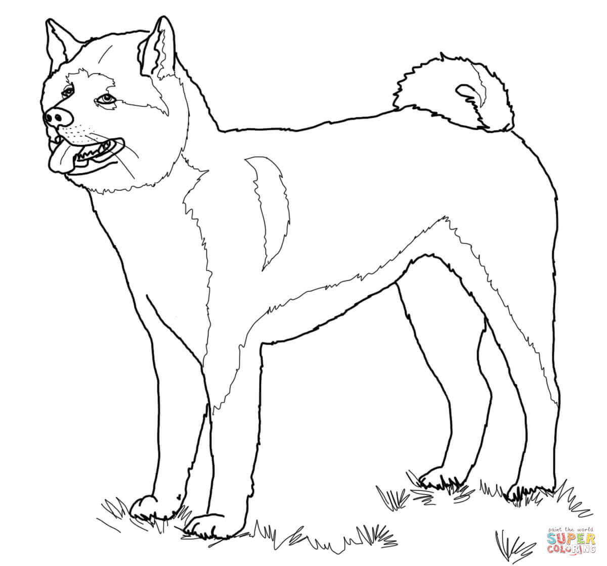 Akita coloring #6, Download drawings