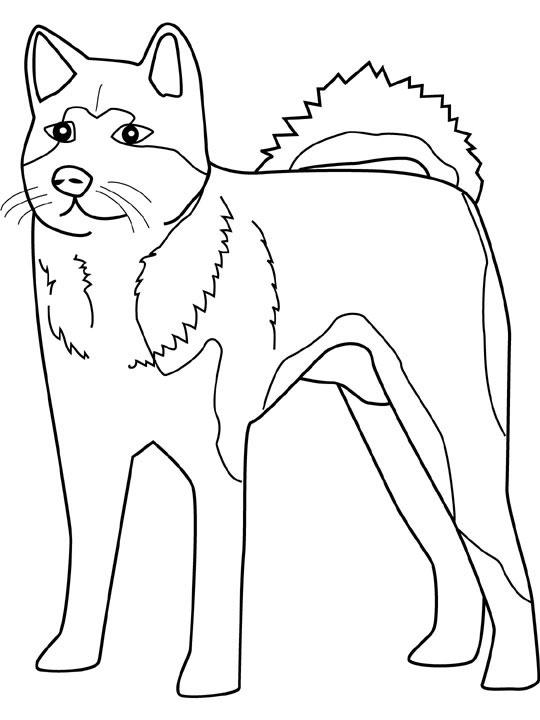 Akita coloring #5, Download drawings