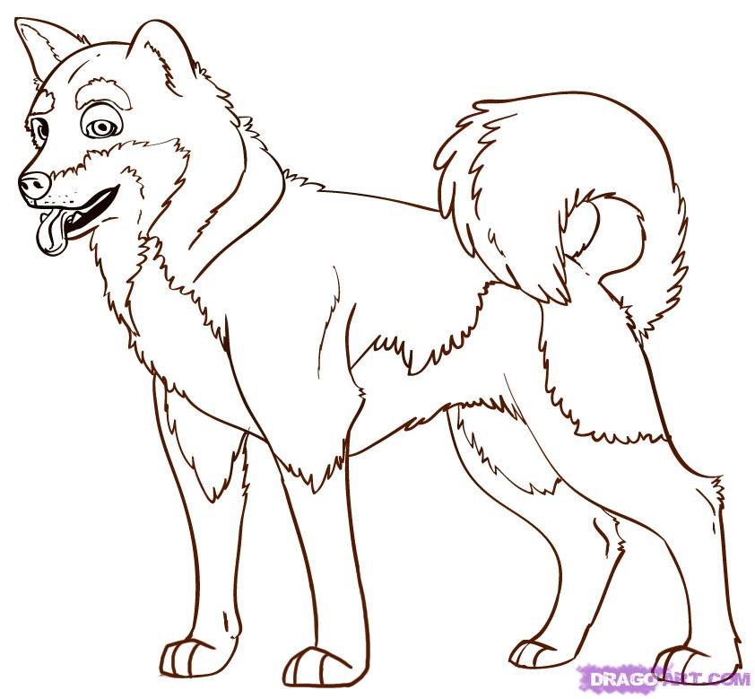 Akita coloring #5, Download drawings