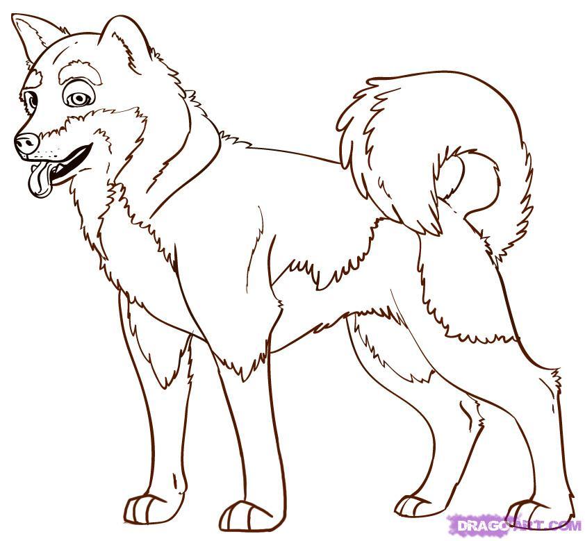 Akita coloring #16, Download drawings