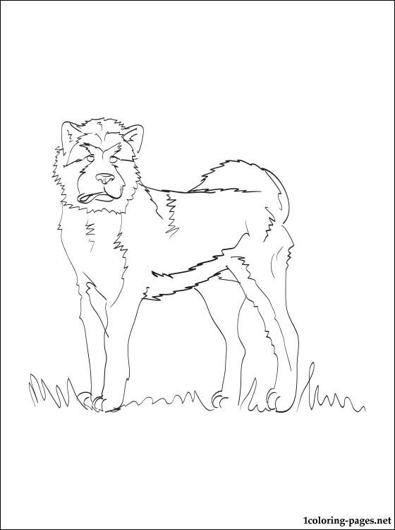 Akita coloring #2, Download drawings