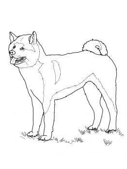 Akita coloring #8, Download drawings