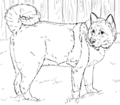 Akita coloring #10, Download drawings