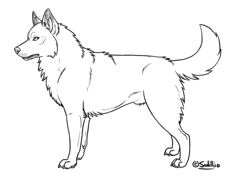 Akita coloring #13, Download drawings