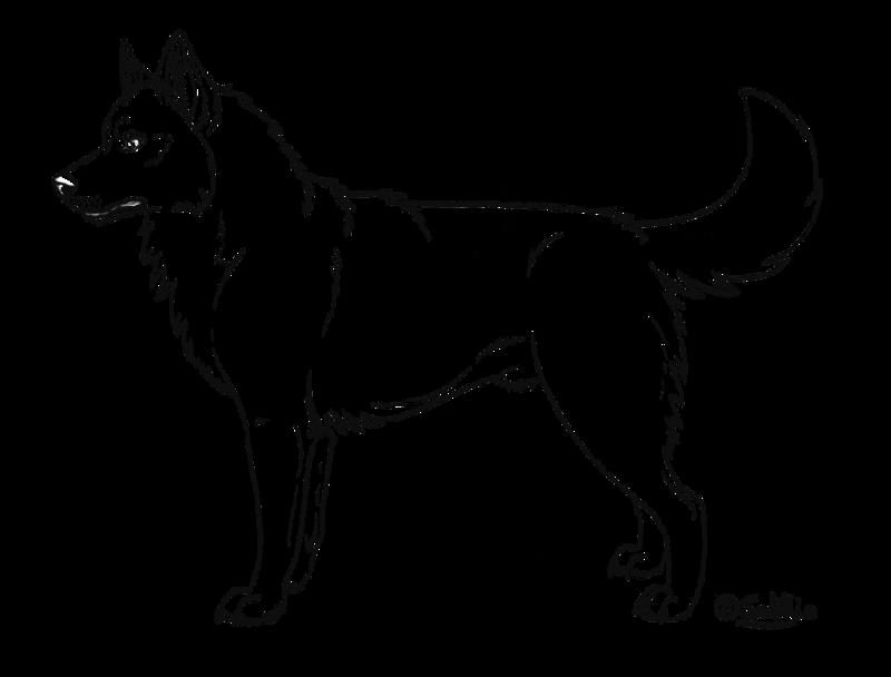 Akita coloring #8, Download drawings