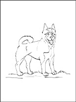 Akita coloring #7, Download drawings