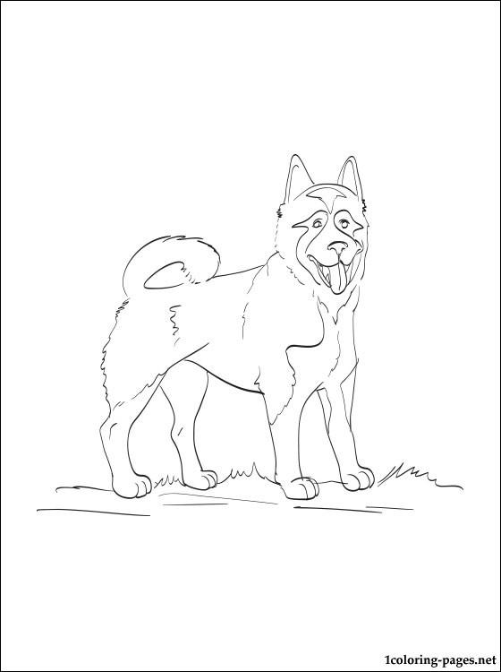 Akita coloring #3, Download drawings