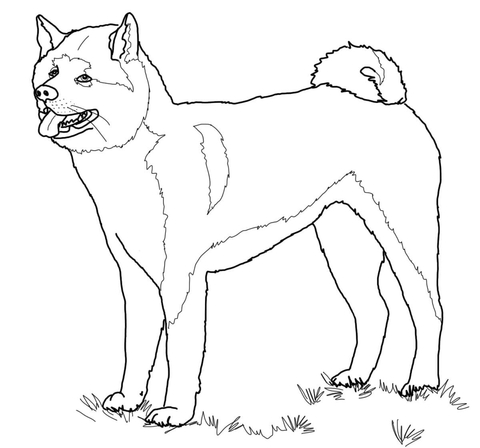 Akita coloring #11, Download drawings