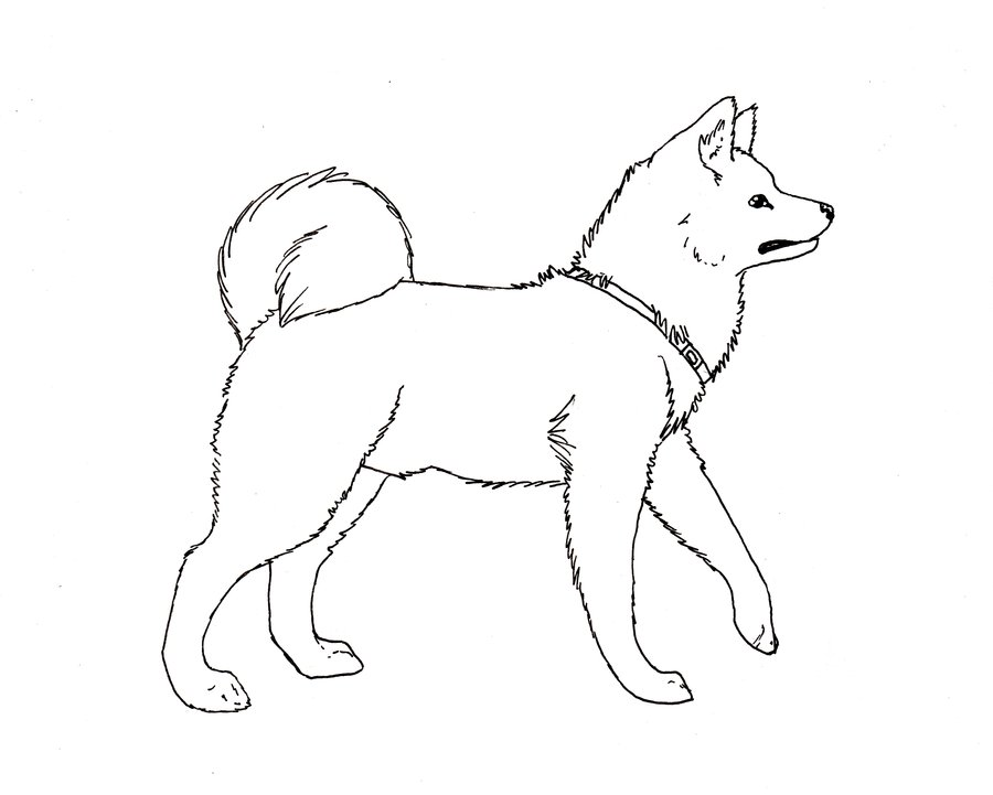 Akita coloring #3, Download drawings