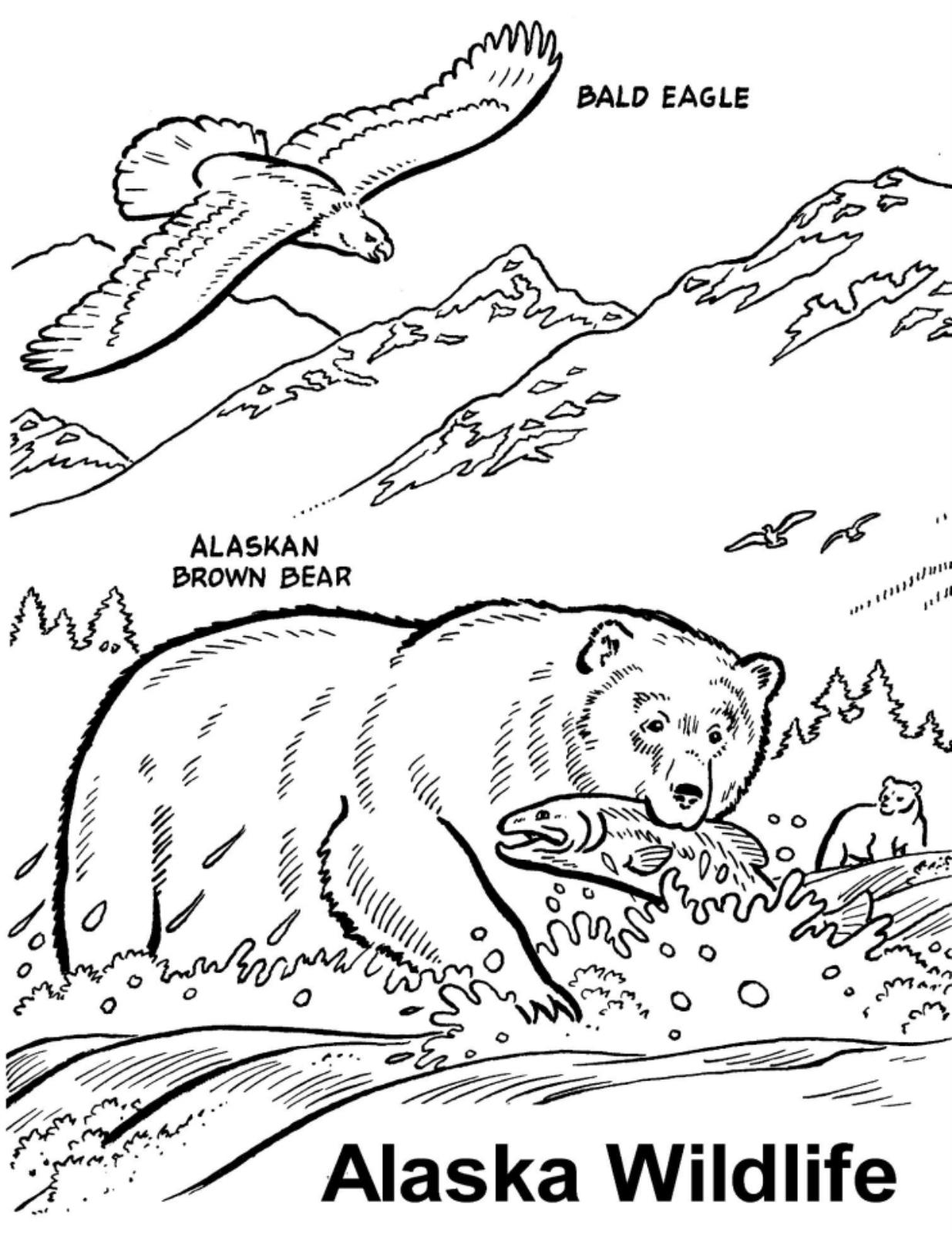 Wildlife coloring #20, Download drawings