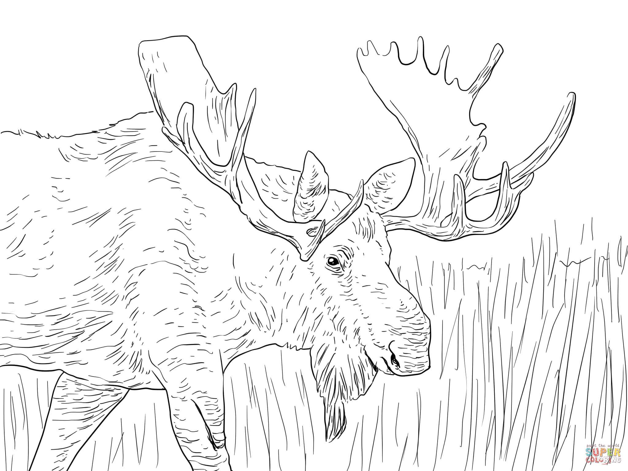 Alaska coloring #6, Download drawings