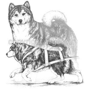 Alaskan Malamute clipart #1, Download drawings
