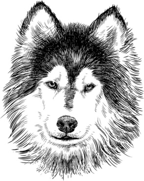 Siberian Husky svg #14, Download drawings