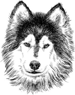 Alaskan Malamute svg #8, Download drawings