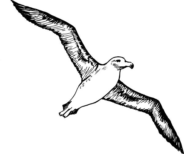 Albatross clipart #18, Download drawings