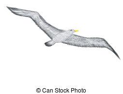 Albatross clipart #13, Download drawings