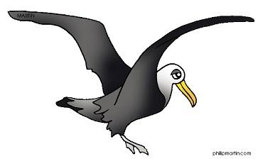 Albatross clipart #19, Download drawings