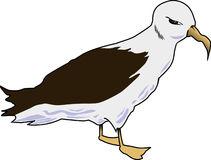 Albatross clipart #17, Download drawings