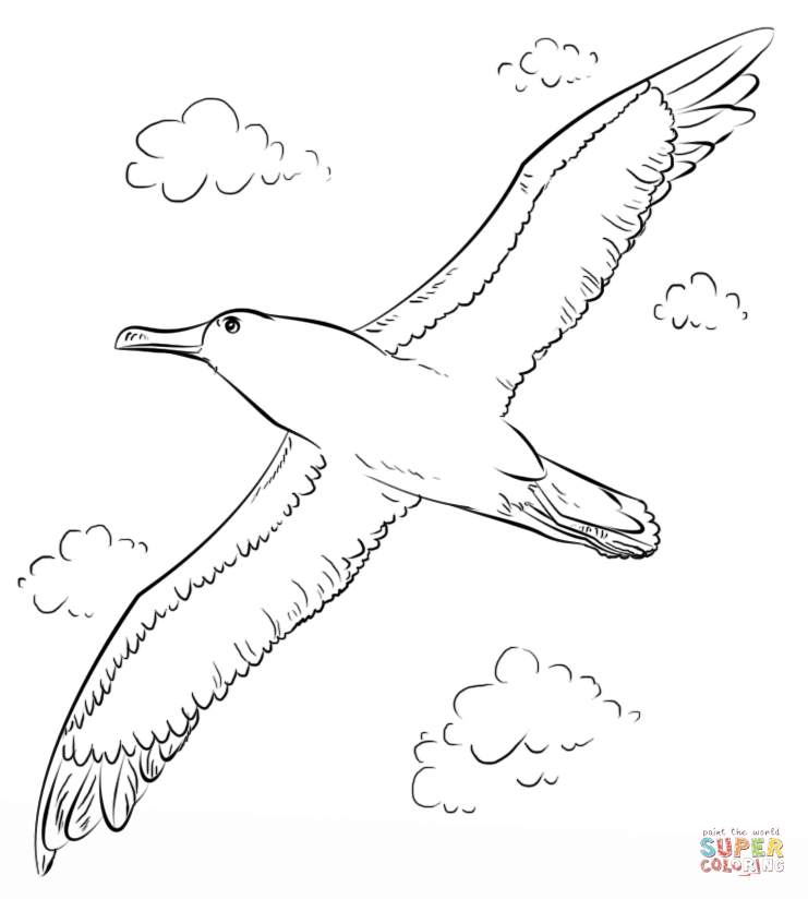 Albatross coloring #6, Download drawings