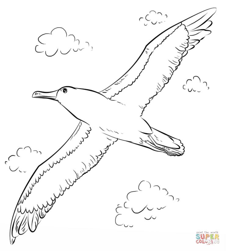 Albatross coloring #15, Download drawings