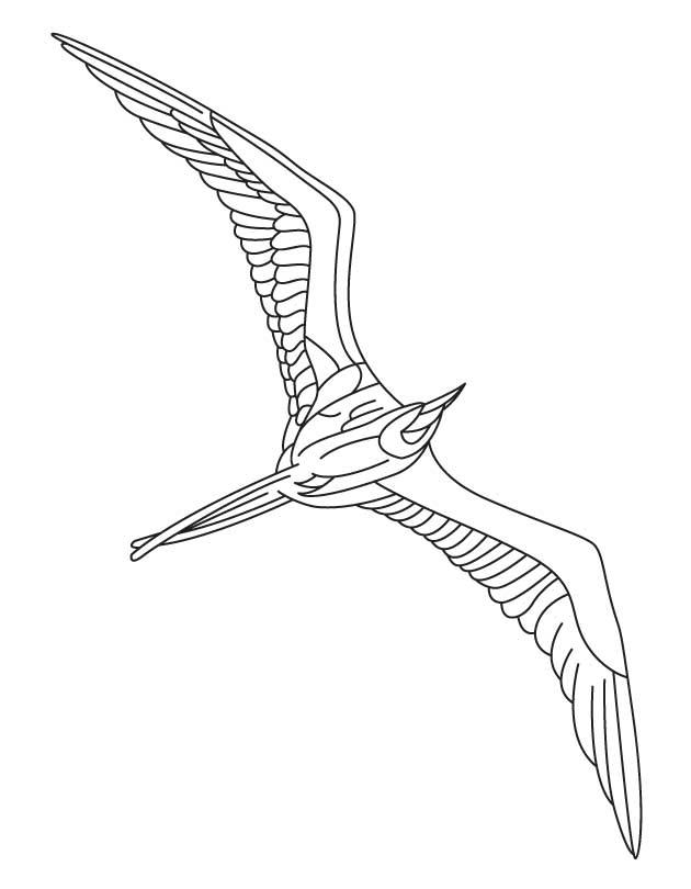 Albatross coloring #5, Download drawings