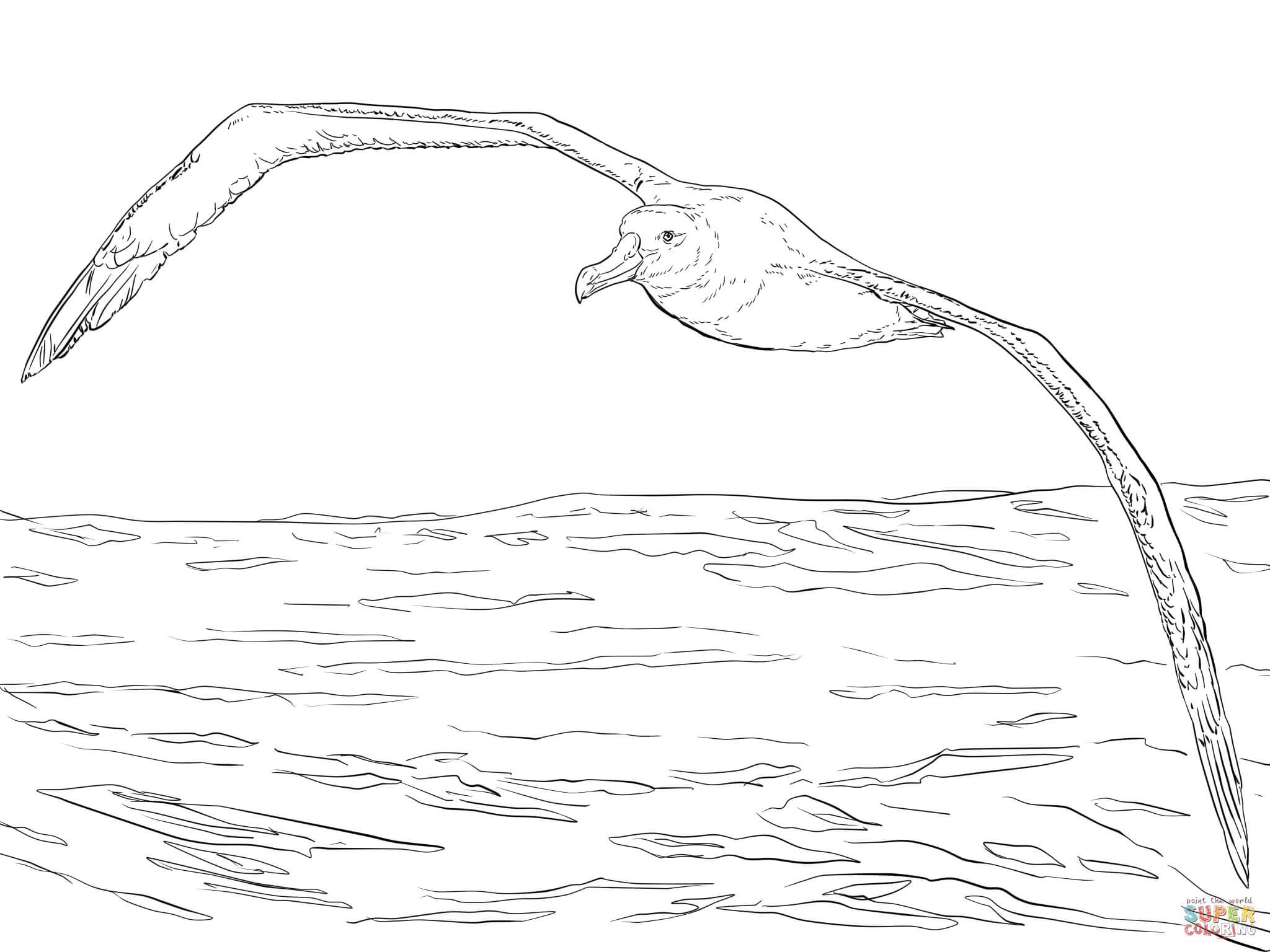 Albatross coloring #7, Download drawings