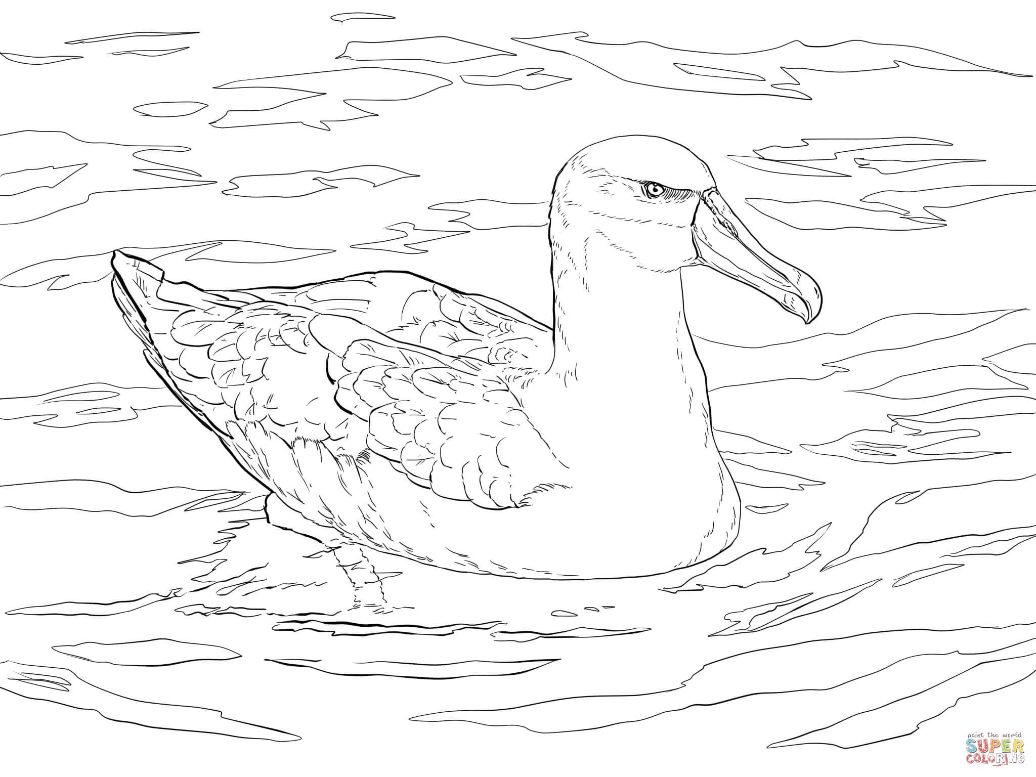 Albatross coloring #1, Download drawings
