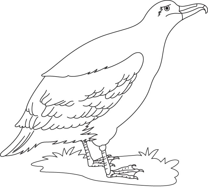 Albatross coloring #3, Download drawings