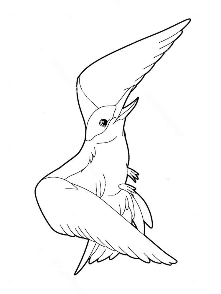 Albatross coloring #14, Download drawings
