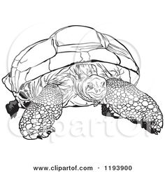 Giant Tortoise clipart #4, Download drawings