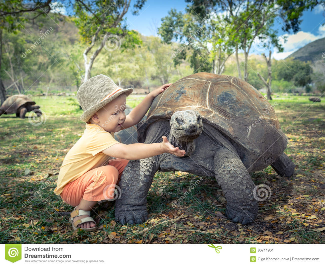 Aldabra Giant Tortoise clipart #8, Download drawings