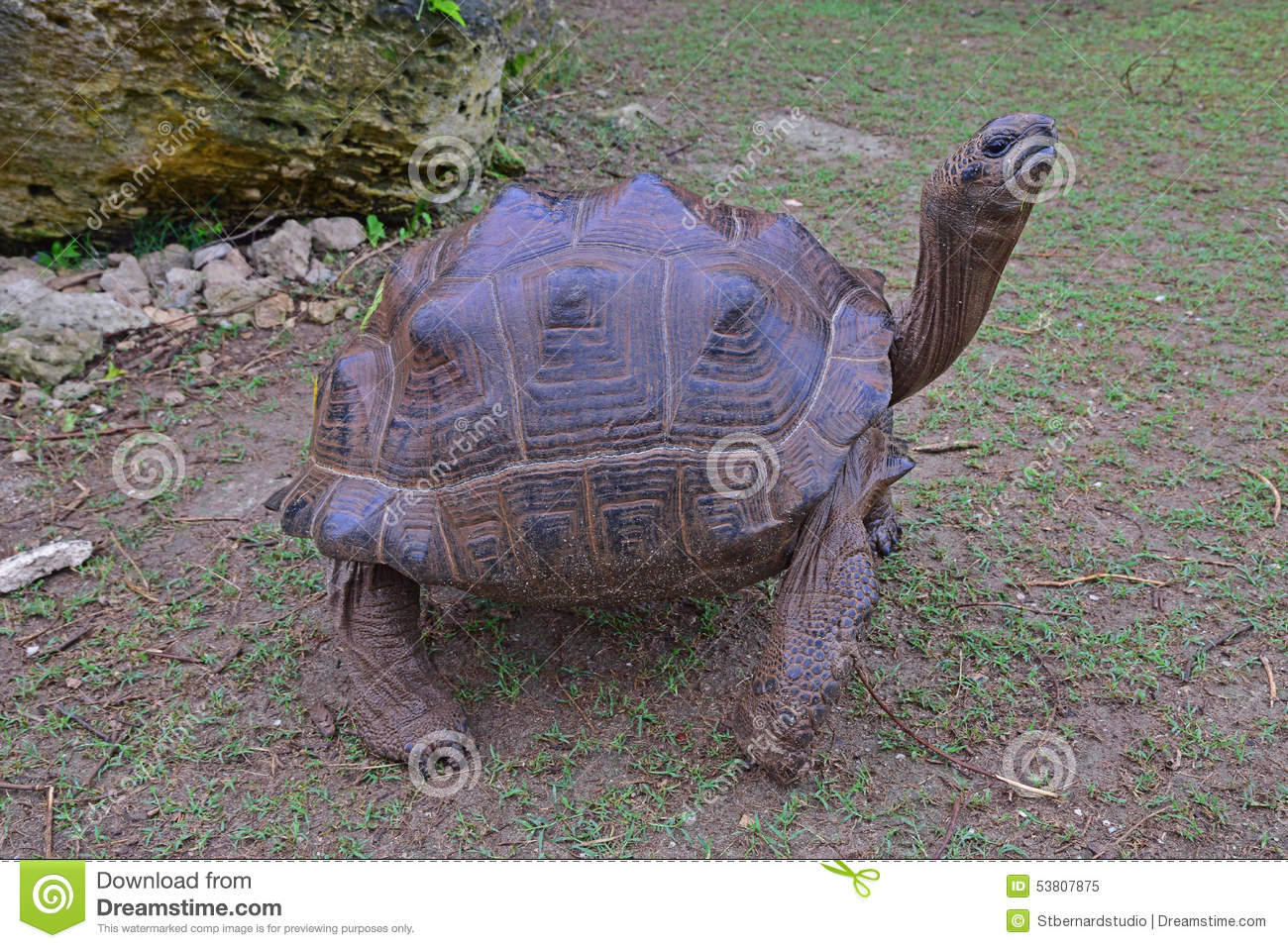 Aldabra Giant Tortoise clipart #4, Download drawings