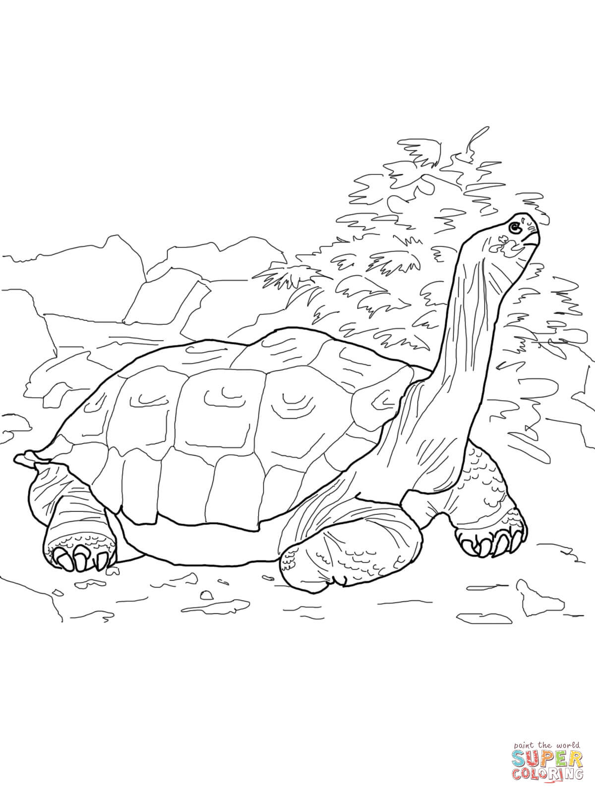 Sulcata Tortoise coloring #11, Download drawings